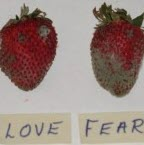 Love-Fear Strawberry