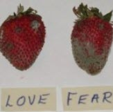 Love-Fear-Strawberries-5