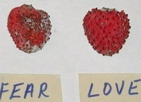 Love-Fear-Strawberries-6