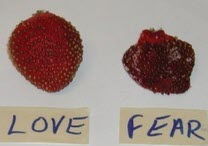 Love-Fear-Strawberries-7